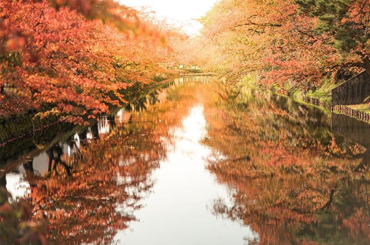 Chrysanthemum and Autumn Foliage Festival
